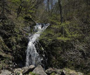 生態系サービスを支える水のイメージ
